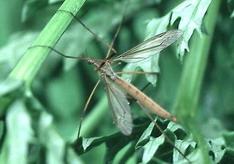 20060403224949-mosquitos-en-las-plantas.jpg