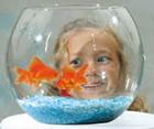 20060529001247-si-has-comprado-peces.jpg