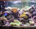 20060917204303-acuario-con-rocas.jpg