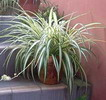 20070302074400-plantas-protectoras.jpg