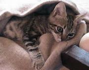 20070805202232-cuidar-el-pelo-de-los-gatos.jpg