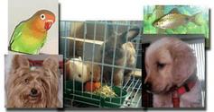 .::: TRUCOS DE ANIMALES :::.